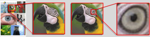 The parrot: Druckerchannel scans the parrot and photographs the parrot eye under the microscope.